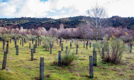 Microsoft y Fundación Repsol colaboran en un proyecto conjunto de reforestación